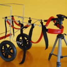 Wózek dla dużego psa w funkcji rehabilitacyjnej